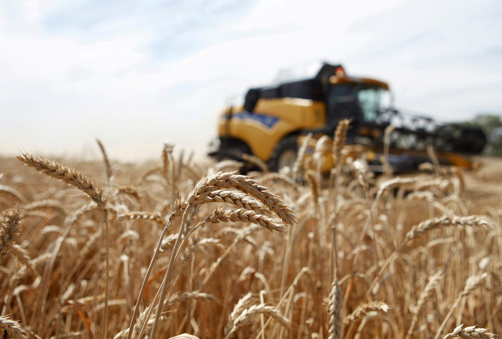 للشهر العاشر على التوالي.. ارتفاع مؤشر أسعار الغذاء العالمية
