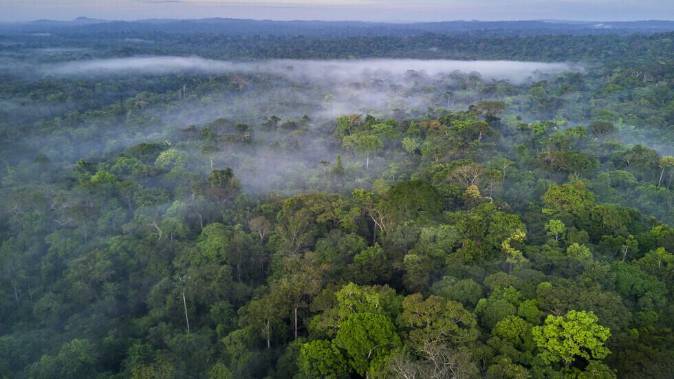 برازيلي يقضي 38 يوما وحيدا في غابات الأمازون بعد تحطم طائرته (صور + فيديو)