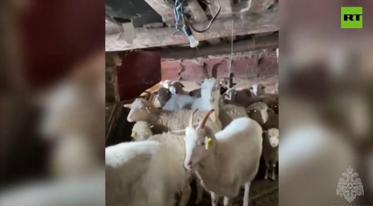 إجلاء سكان وحيوانات جراء فيضانات اجتاحت جمهورية باشكورتوستان الروسية