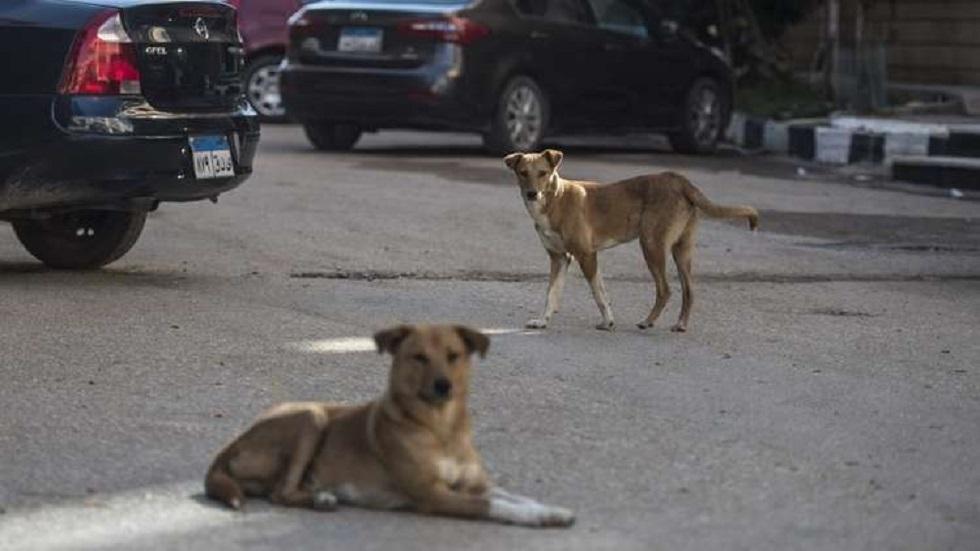 كلب ضال يعقر 12 طفلا ويثير الذعر في قريتين ببني سويف