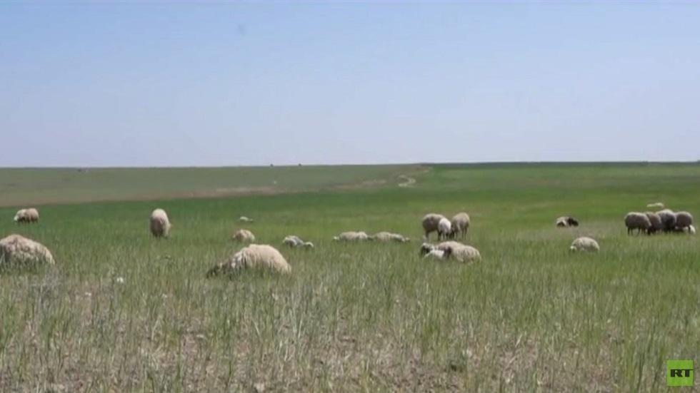 احتباس الأمطار.. خطر يهدد الجزيرة السورية