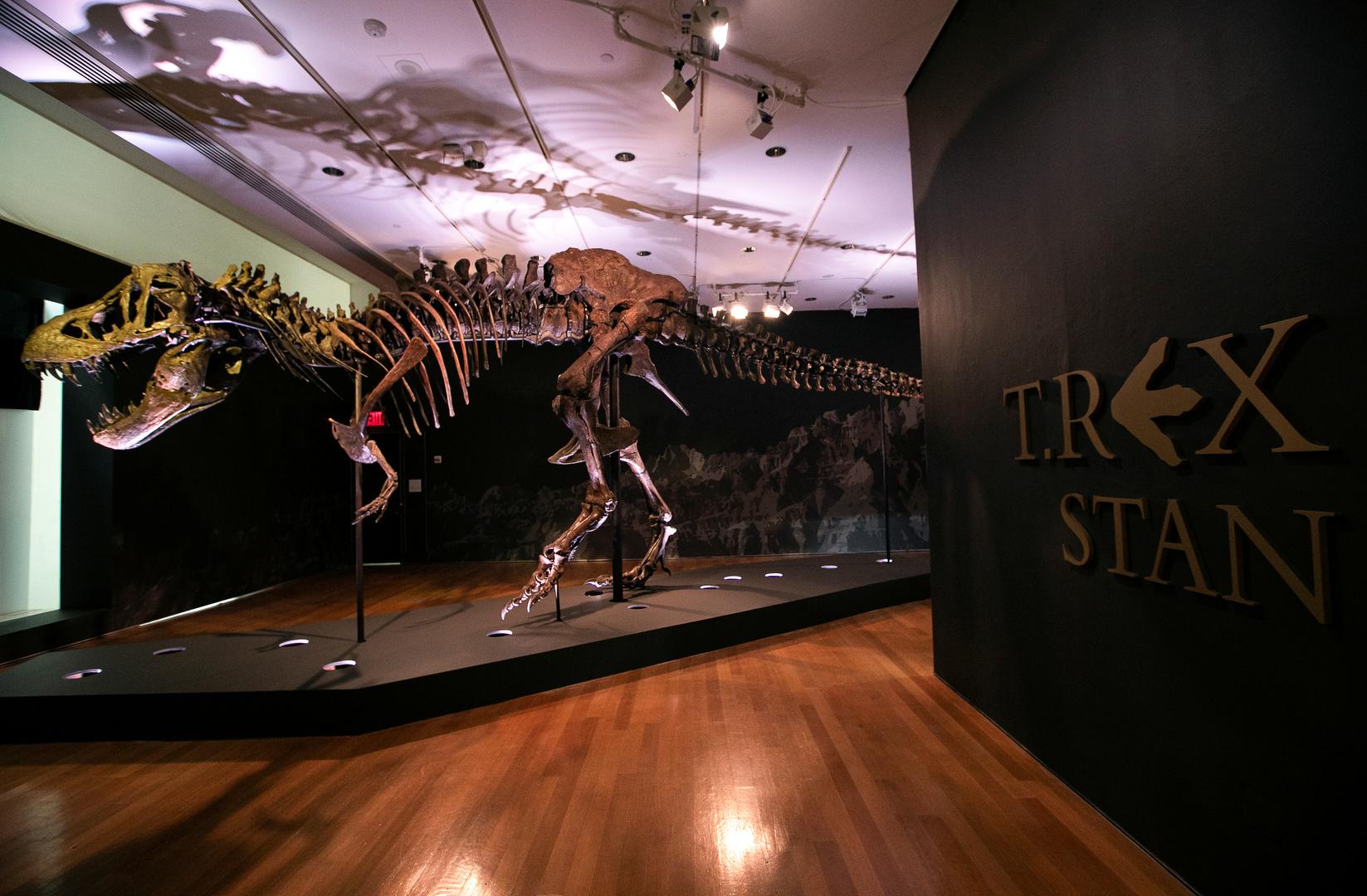 هيكل عظمي تيرانوصور.