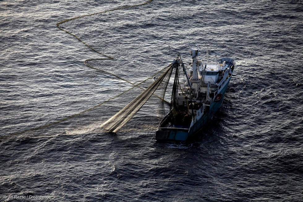 صياد أسترالي يصطاد سمكة تونة تزن 271 كغ