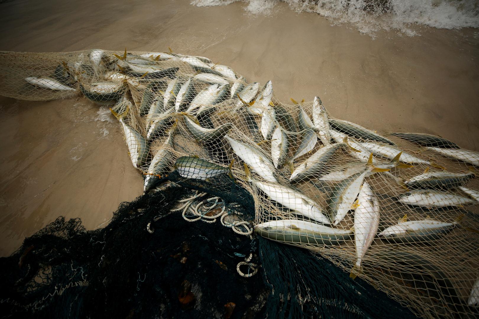 باريس تطالب بتطبيق سريع لاتفاق صيد السمك لما بعد
