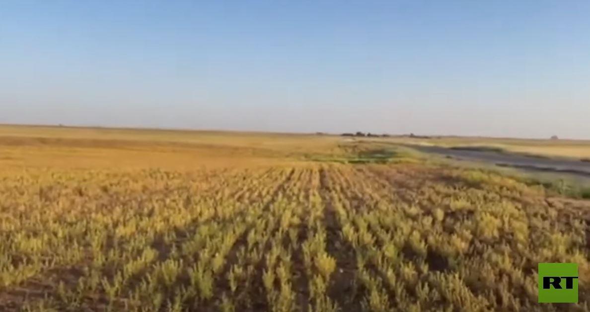 سوريا.. الجفاف يدمر محاصيل المزارعين بين الحسكة والقامشلي