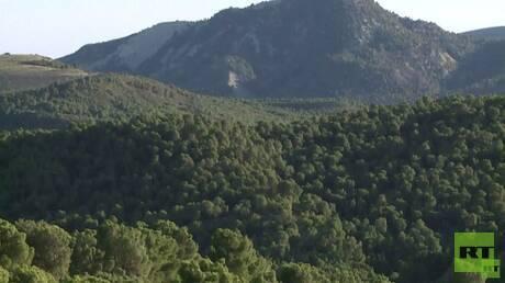 الصين الأولى في القضاء على الغابات وأوروبا الثانية