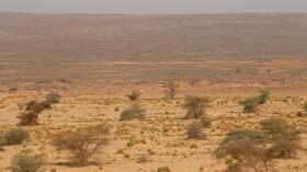 تقارير إعلامية: ارتفاع نسبة تجارة الأسلحة والمواد المتفجرة في الجزائر