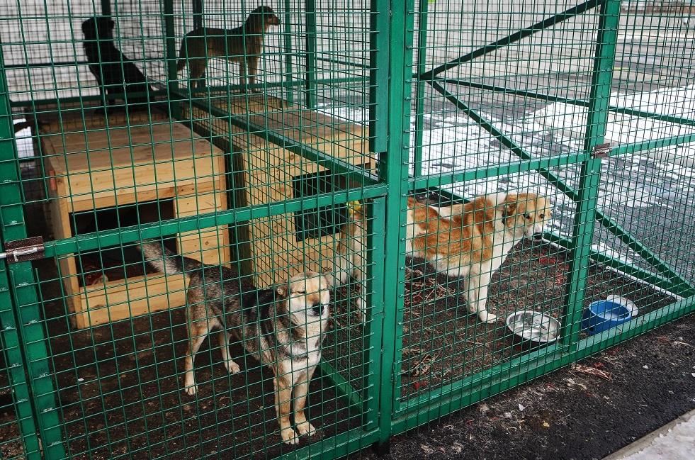 مجهولون يطلقون سراح كلاب من المأوى في ريازان الروسية