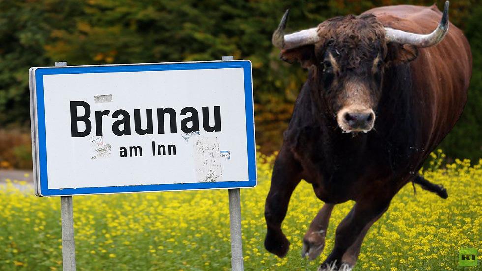 ثور هائج يهاجم مزارعا ووحدة إطفاء في ريف النمسا