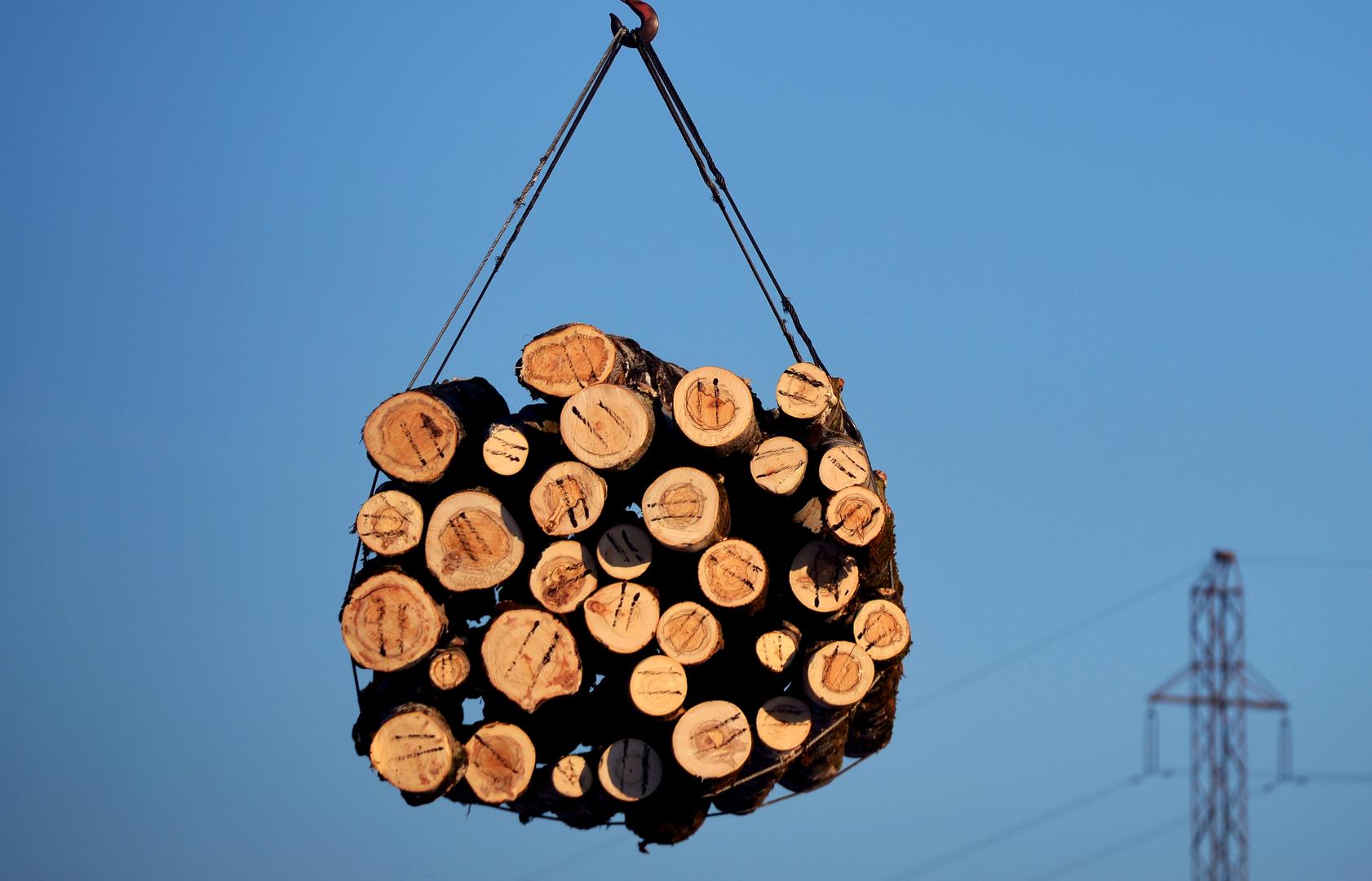 الحكومة الروسية تفرض رسوما على بعض صادرات الخشب