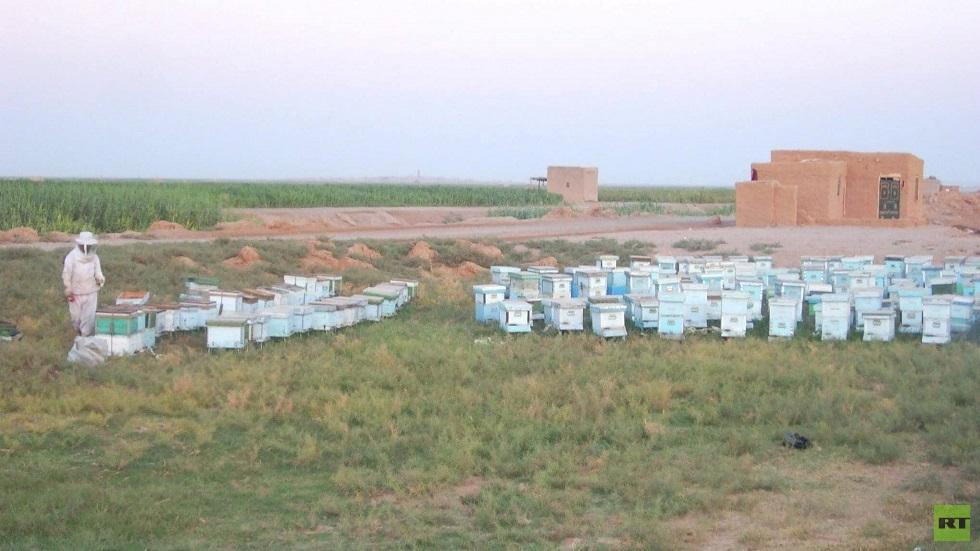سوريا.. توقعات بزيادة إنتاج العسل وانخفاض أسعاره