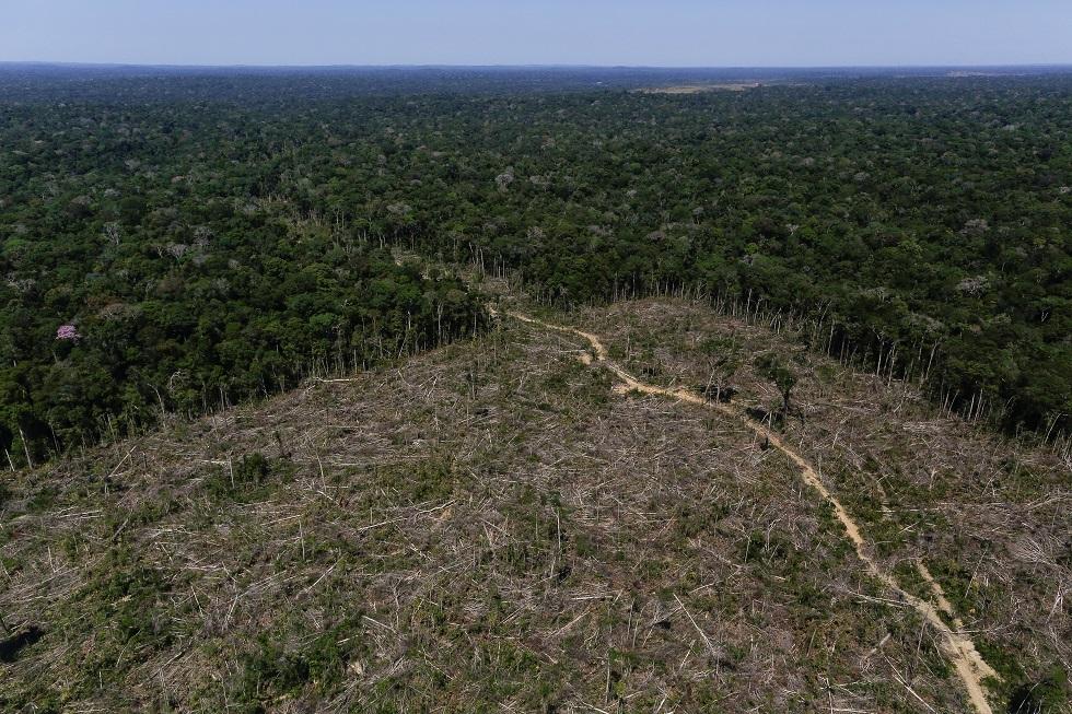 غابات البرازيل