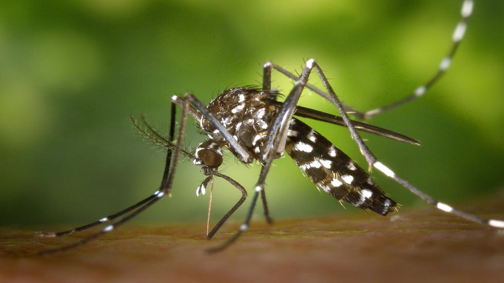فحص مجهري بالفيديو يكشف أسرار غزو الملاريا لخلايا الدم الحمراء