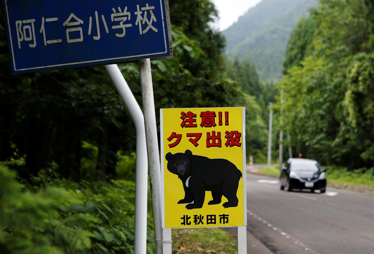 دب يصيب 4 أشخاص ويتسلل إلى قاعدة عسكرية في اليابان