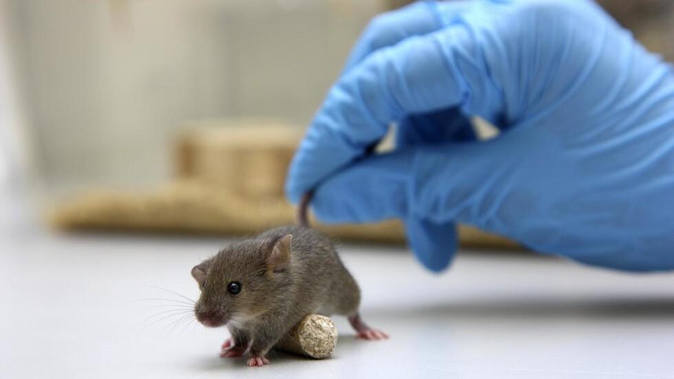 اكتشاف نوعين جديدين من خلايا دماغية غير معروفة سابقا في الفئران
