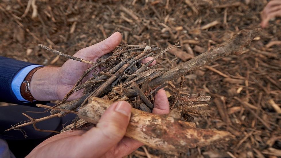 علماء روس يكتشفون طريقة للتخلص من نفايات الأخشاب