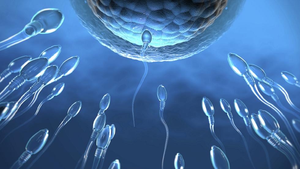 تطوير أجسام مضادة لمنع الحمل