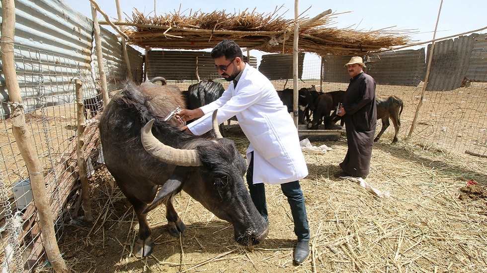 تونس.. دعوة لإشراك الأطباء البياطرة في حملة التلقيح ضد كورونا