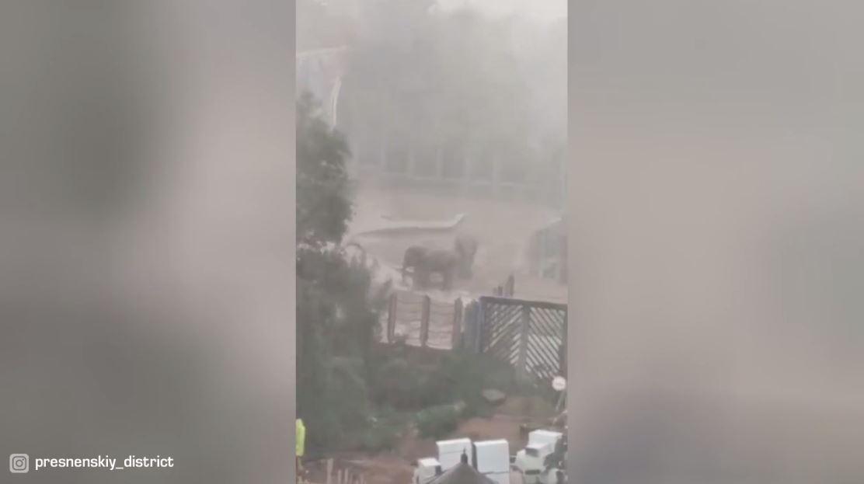 مشاهد من حديقة حيوانات موسكو أثناء العاصفة
