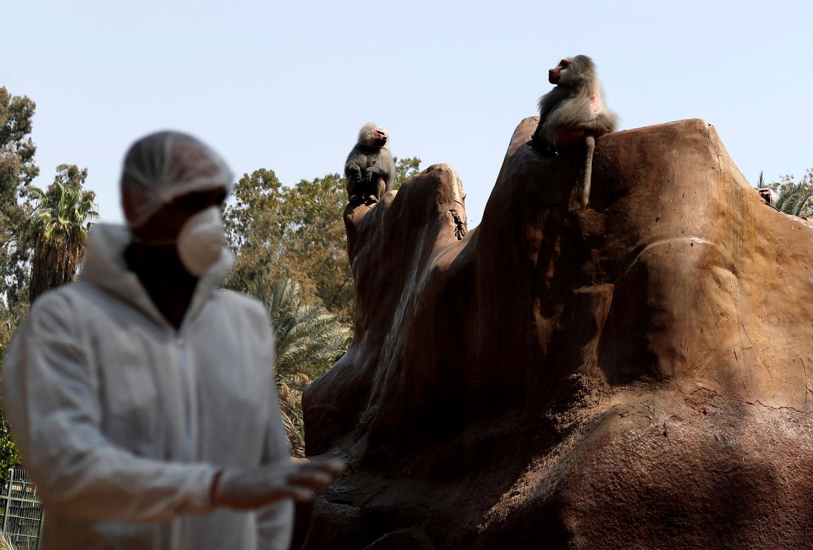 حديقة حيوانات في مصر