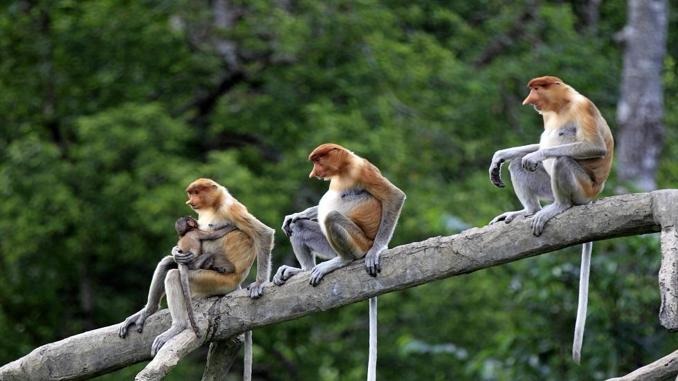 كشف خطورة جدري القرود على البشر