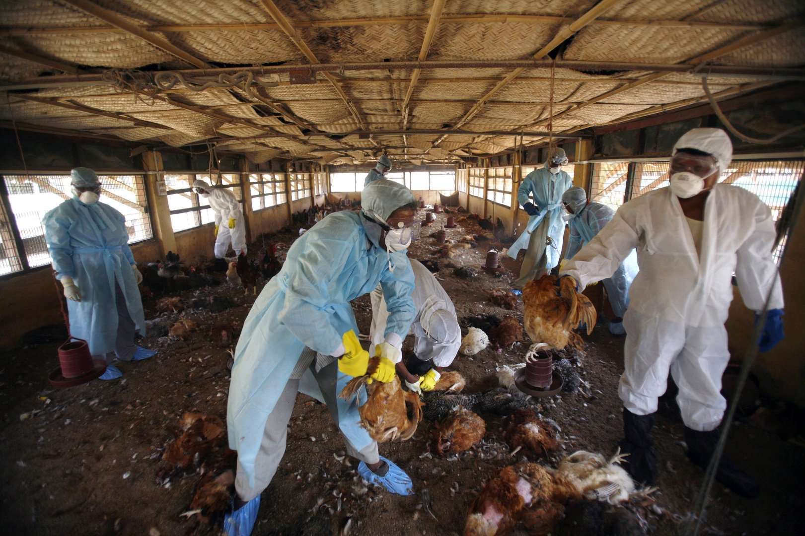 الهند تعلن عن أول وفاة بإنفلونزا الطيور