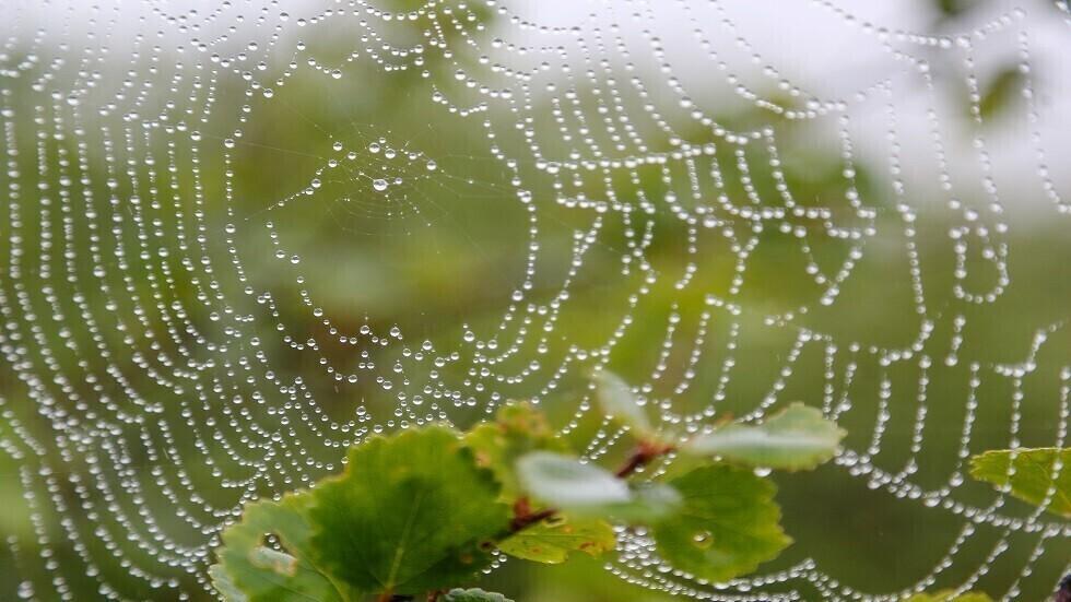 باحثون يطورون حرير عنكبوت صناعي أقوى من الفولاذ والكيفلار