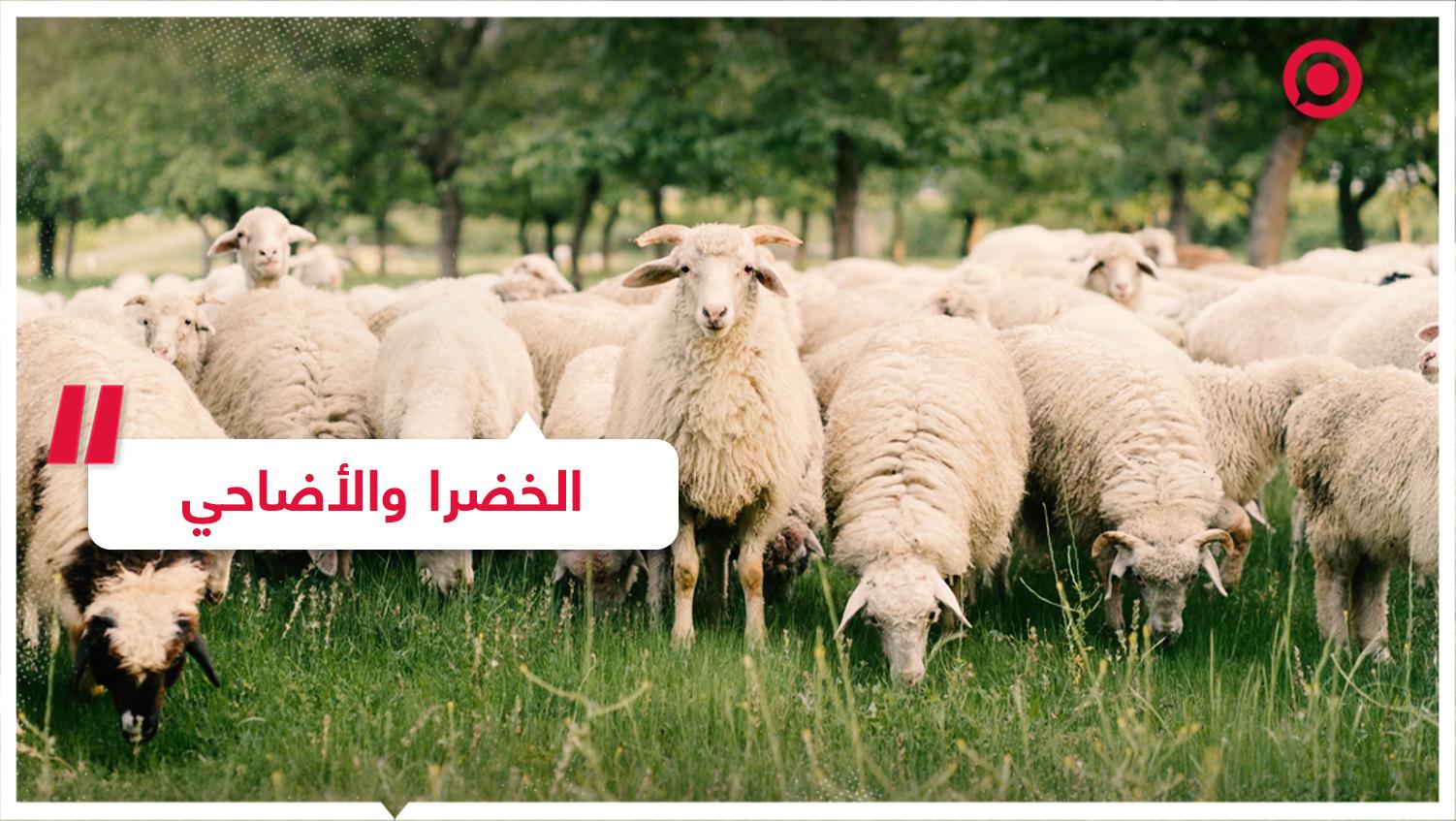 غضب في الأردن بسبب منشور ينتقد ذبح الأضاحي