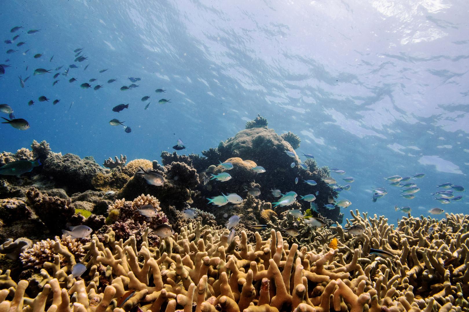 الحاجز المرجاني العظيم ينجو من قائمة المعالم الـ