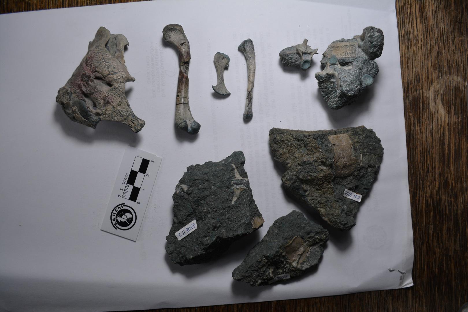 عمره 150 مليون عام.. اكتشاف <a href='/tags/196611-%D8%AD%D9%81%D8%B1%D9%8A%D8%A9'>حفرية</a>