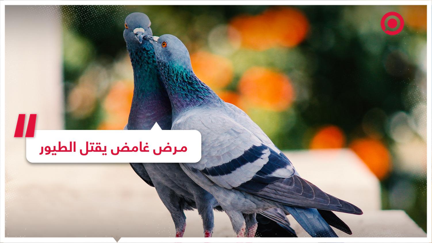 #مرض #حيوانات #غرائب #طيور