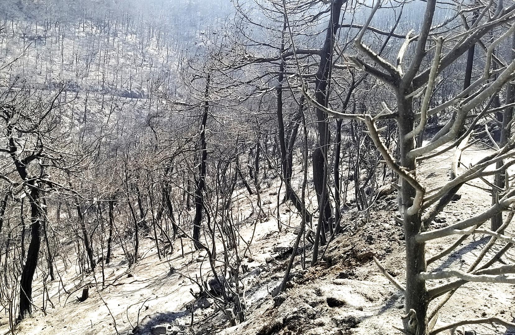 سوريا.. إخماد الحريق الذي امتد من الأراضي اللبنانية باتجاه حمص