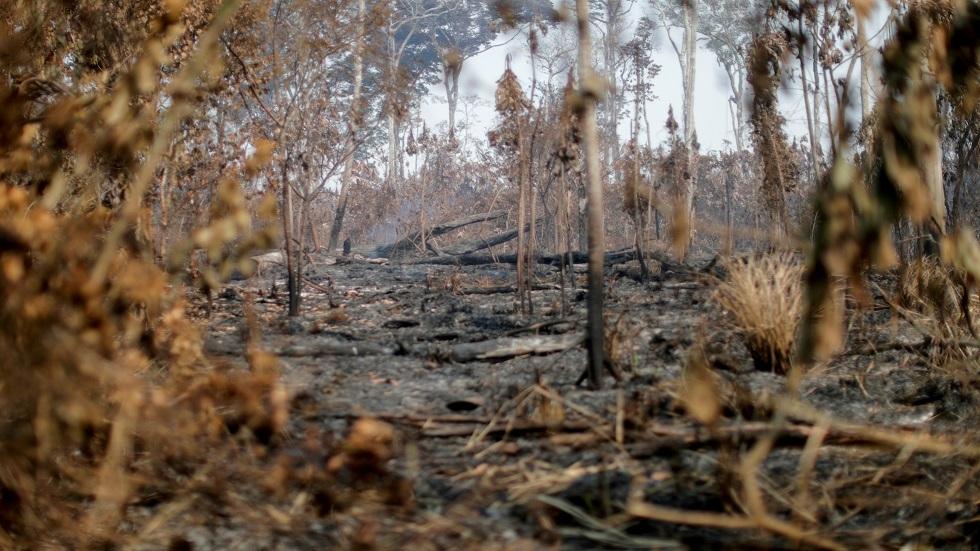 تأثر الغابات في البرازيل بتغير المناخ