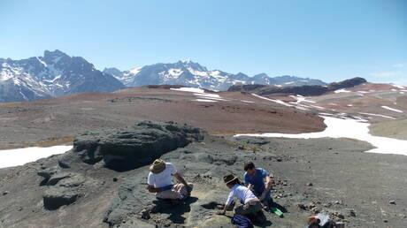 """عمره 150 مليون عام.. اكتشاف حفرية """"جد"""" تماسيح العصر الحديث في تشيلي (صورة)"""
