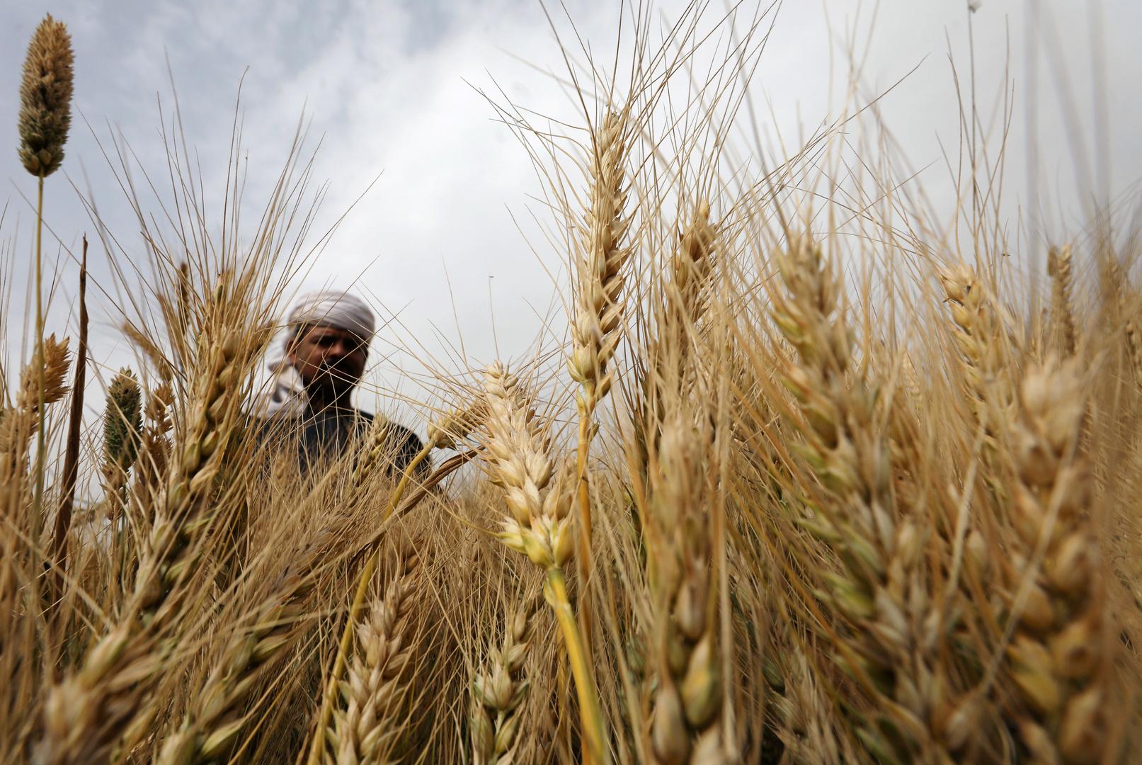 وزير التموين المصري: احتياطي القمح يكفي لمدة 6 أشهر ونصف