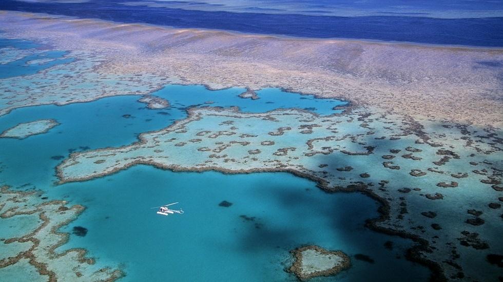 اكتشاف أكبر مرجان في الحاجز المرجاني العظيم (فيديو)