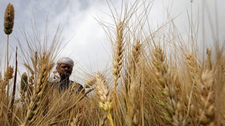 """وزير التموين المصري: احتياطي القمح يكفي لمدة 6 أشهر ونصف """"لأول مرة"""""""