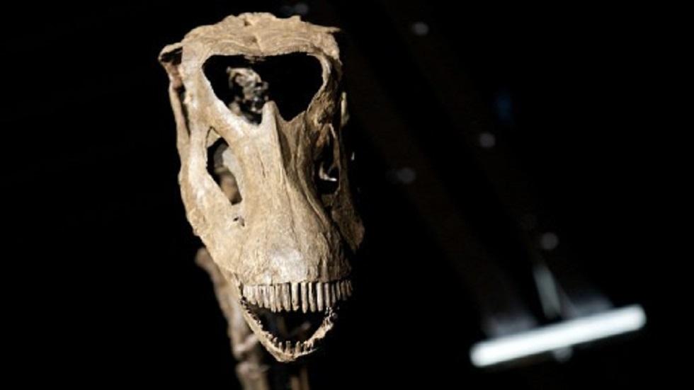 العثور على هيكل ديناصور صغير في الصحراء الليبية (صورة من الأرشيف)