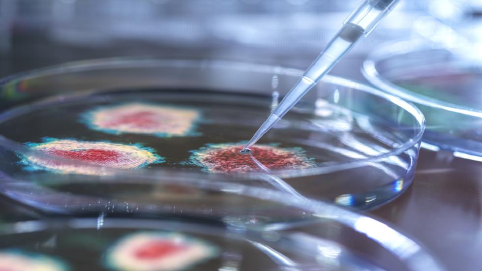 الثدييات تحمل مقبرة للفيروسات في الحمض  النووي.. فما الغرض منها؟