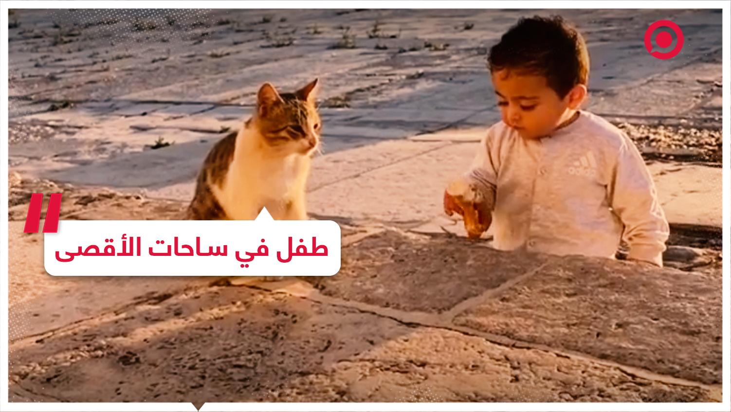 #المسجد_الأقصى #قطة #طفل #فلسطين
