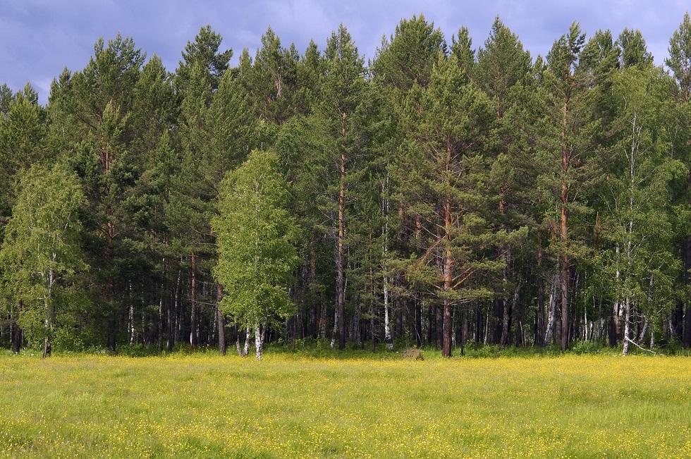 بعد اختفائه لستة أيام.. العثور على جندي روسي قصد الغابة بحثا عن الفطر