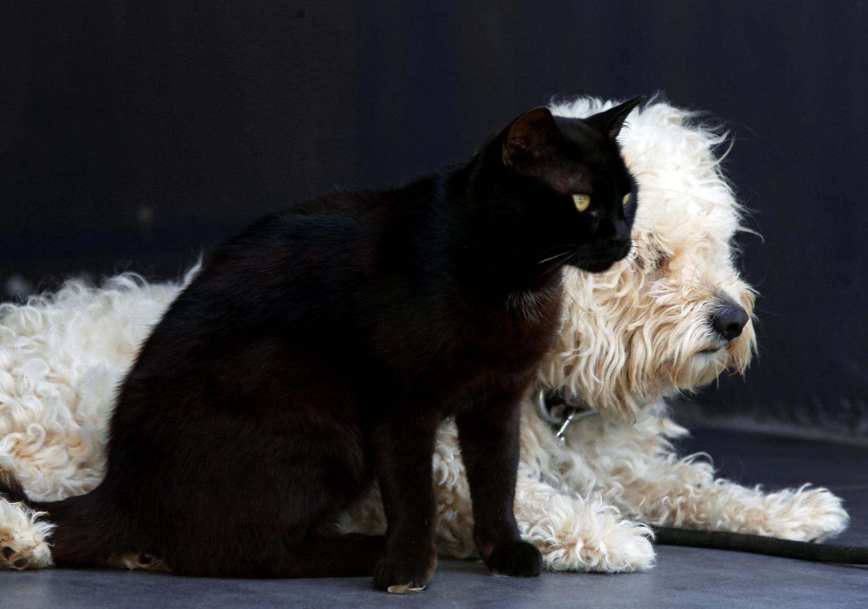 قطة وكلب