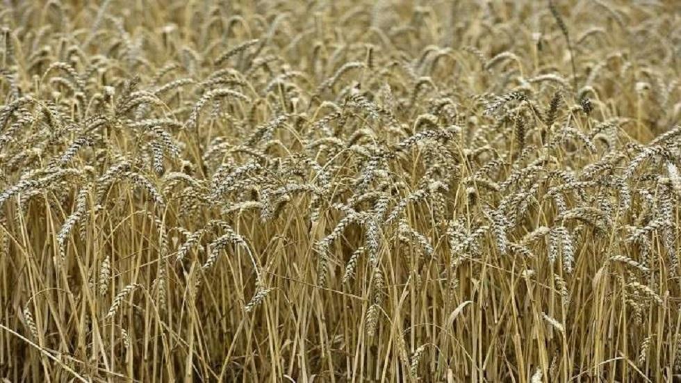 السودان يتسلم الشحنة الرابعة من منحة القمح الأمريكية
