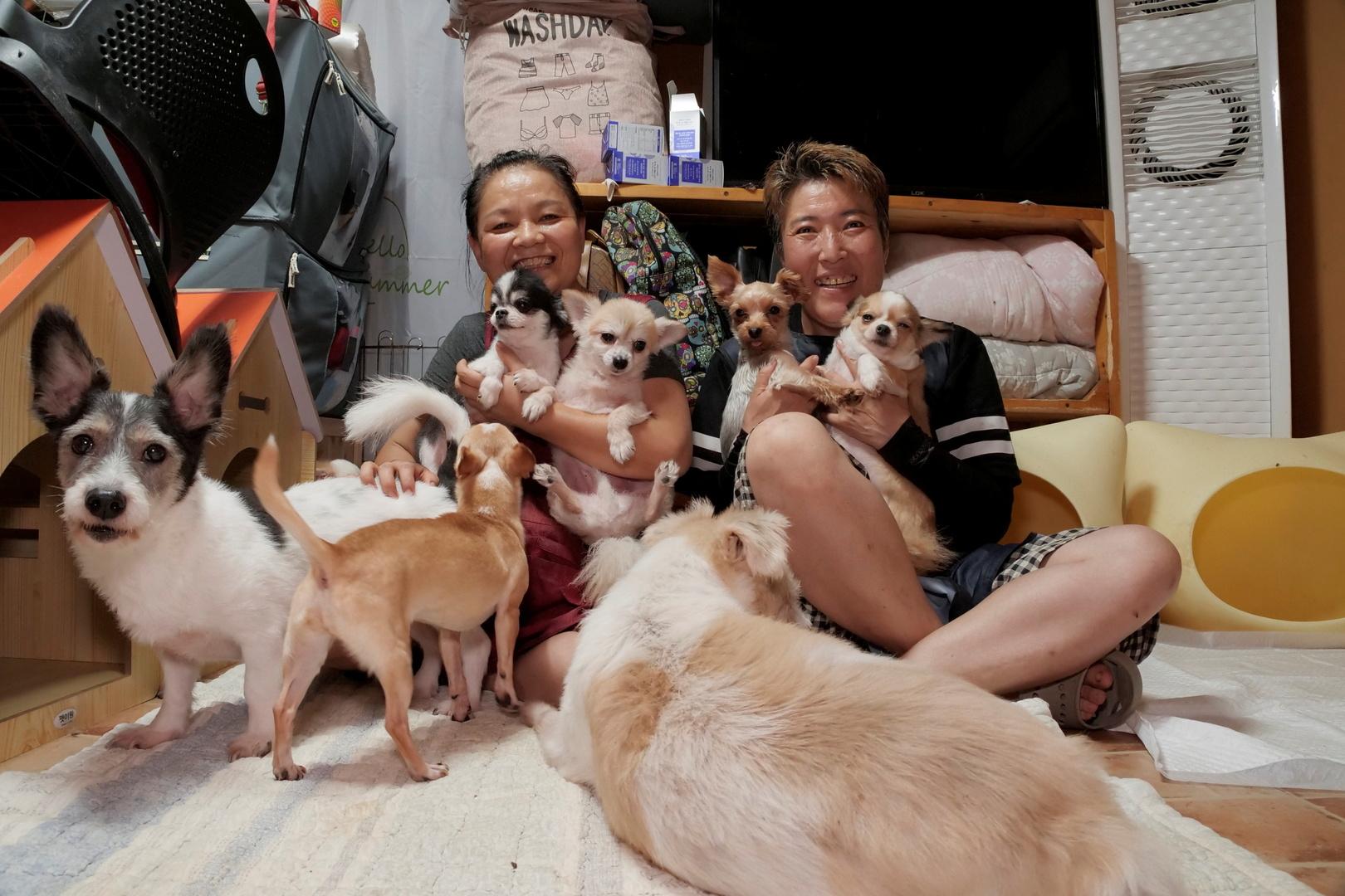 بعد تعديل قانوني.. الحيوانات في كوريا الجنوبية أصبحت بمثابة