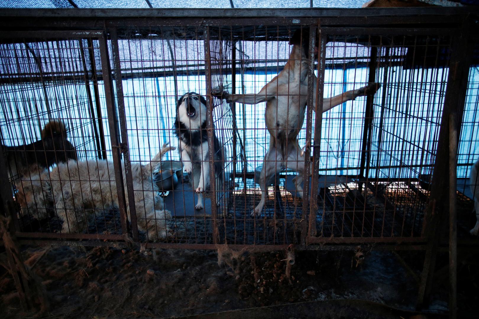 لحوم الكلاب مرشحة بقوة للاختفاء من الموائد في كوريا الجنوبية