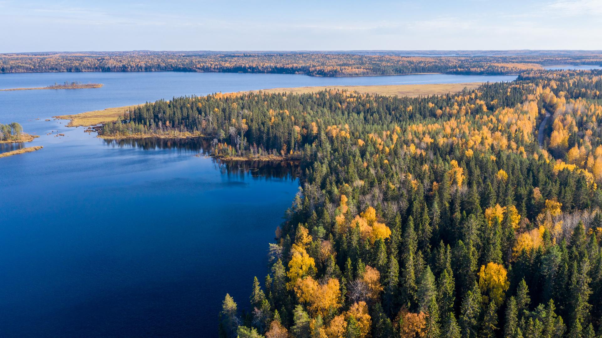 غابة وبحيرة شمال غربي روسيا