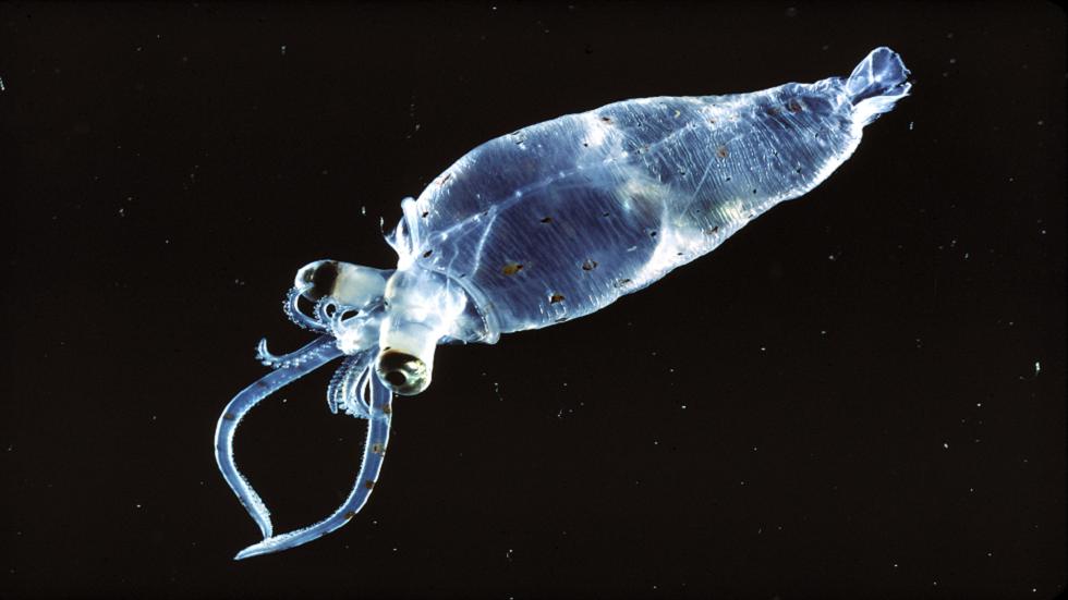 الكشف عن ماهية مخلوق غامض