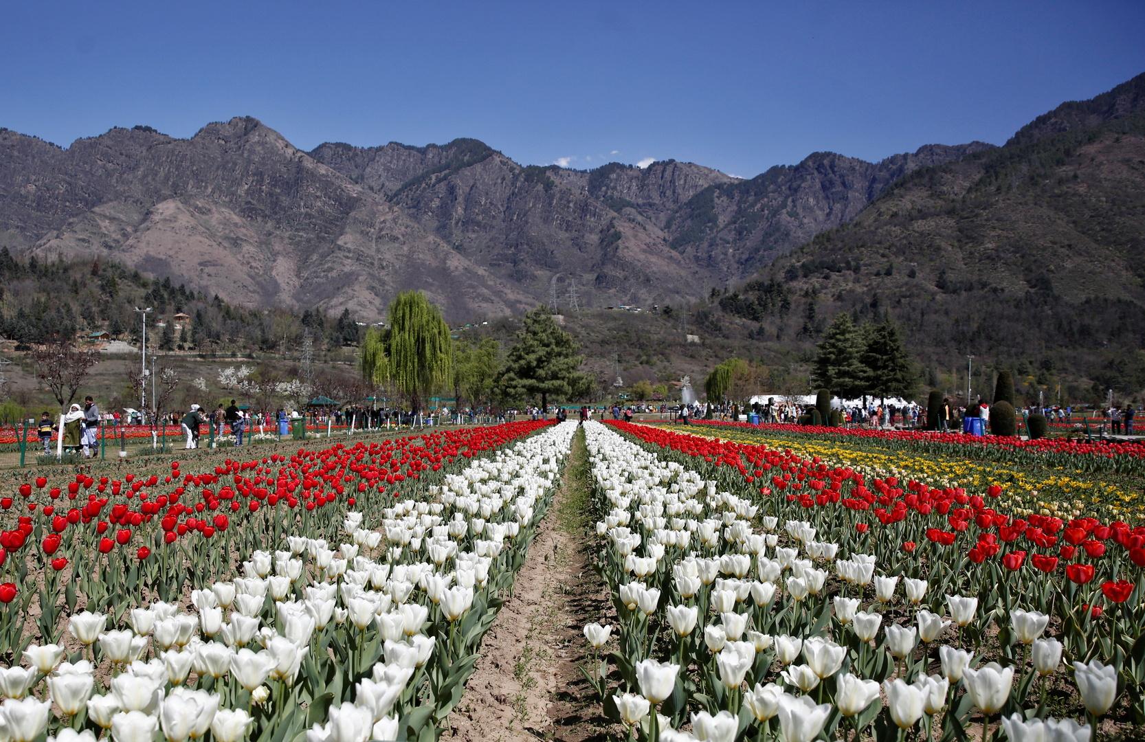حديقة خزامى على سفوح سلسلة جبال زابروان في مدينة سريناغار في كشمير.