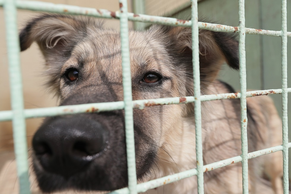 بتمويل أمريكي.. الكشف عن تجارب صادمة على الكلاب بمختبر في تونس