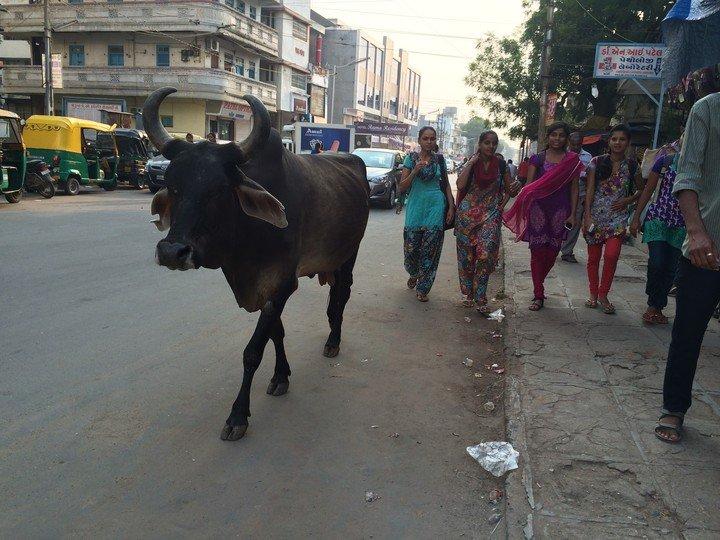India's surrogacy industry